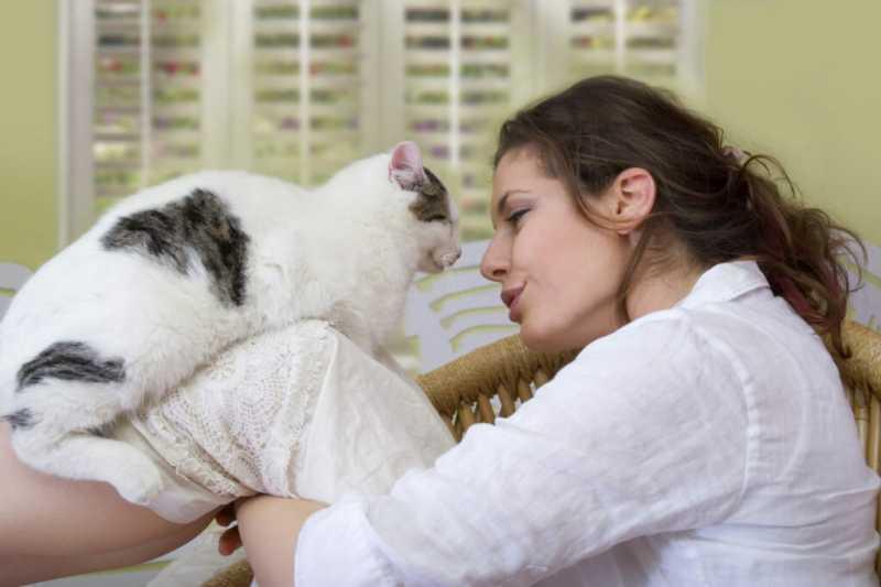 Японские ученые доказали: кошки понимают человеческую речь