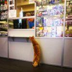 Смешные коты, которые поднимают настроение #144