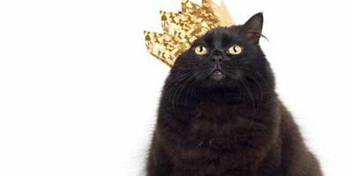 Самые богатые кошки в мире