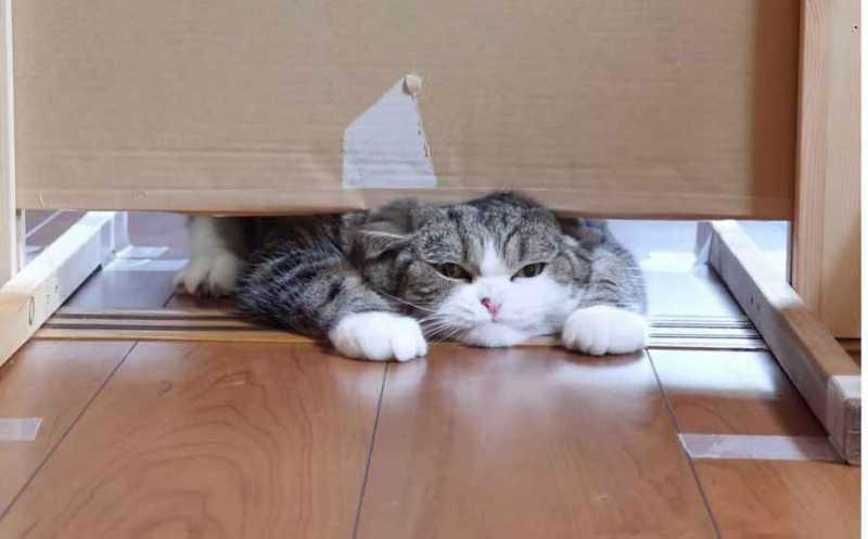 Правда ли, что кошки могу пролезть где угодно?