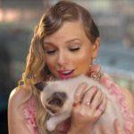 Кошки-крутышки и их знаменитости