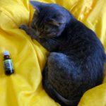 Как отучить кошку гадить: работают ли советы из интернета, и что показывает личный опыт