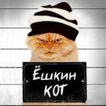 Пушистые бандиты: истории о котах, преступивших закон