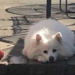 Крепкая дружба - кошка целый год приходила в гости к своей умершей подруге-собаке