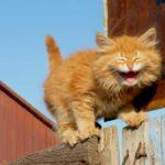 Смешные коты, которые поднимают настроение #146