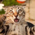 Типы личностей у кошек и как они связаны с характером хозяина?