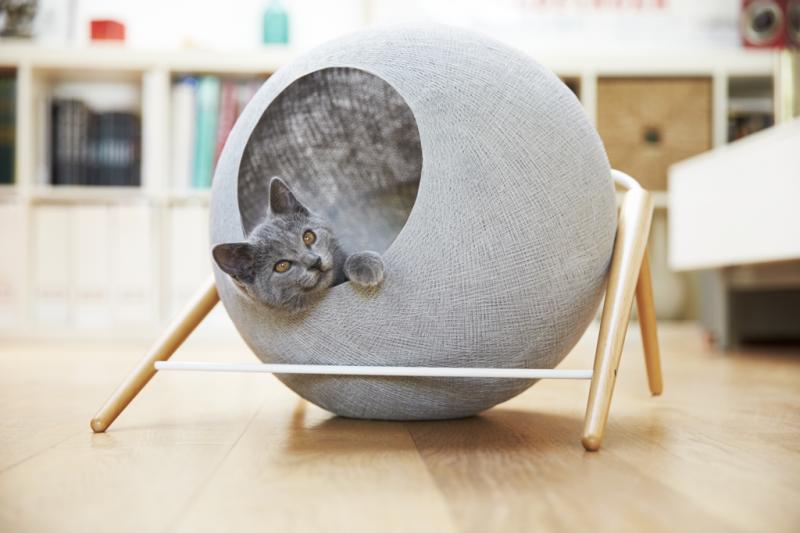 Как выбрать домик для кота?