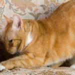 Смешные коты, которые поднимают настроение #157