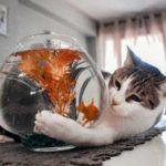 Кошачий кодекс или все кошки делают это