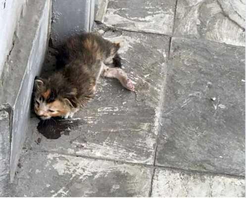Девушка обнаружила рядом с офисом крошечного умирающего котенка - он стал первым в ее жизни питомцем