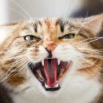 Ваш кот тайно ненавидит Вас? 7 причин немилости пушистика