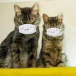 Может ли кошка заболеть коронавирусом или заразить им человека?