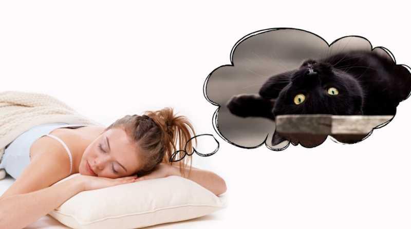 К чему снится кошка? Толкования сновидений