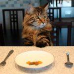 Смешные коты, которые поднимают настроение #148