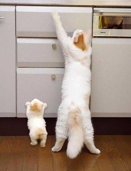 Смешные коты, которые поднимают настроение #147
