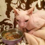 Кошку оставили одну на 4 дня – когда хозяева вернулись, в глазах животного стояли слезы