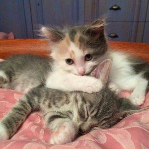 Смешные коты, которые поднимают настроение #156