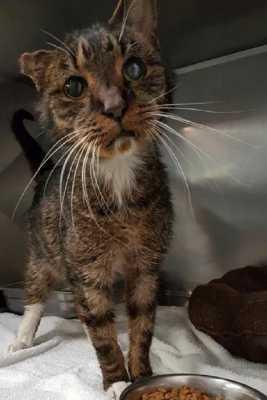 Как больной 15-летний уличный одноухий кот обрел на закате своей жизни новый дом, хозяев, любовь и заботу
