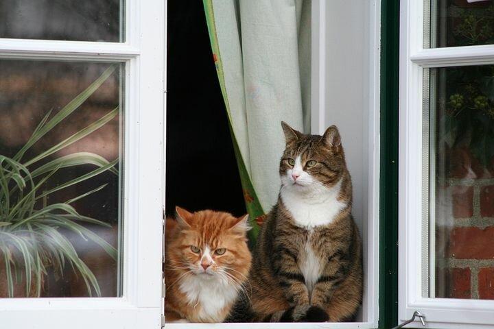 Почему кошки так любят сидеть у окошка?