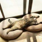 Смешные коты, которые поднимают настроение #160