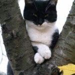 Смешные коты, которые поднимают настроение #151