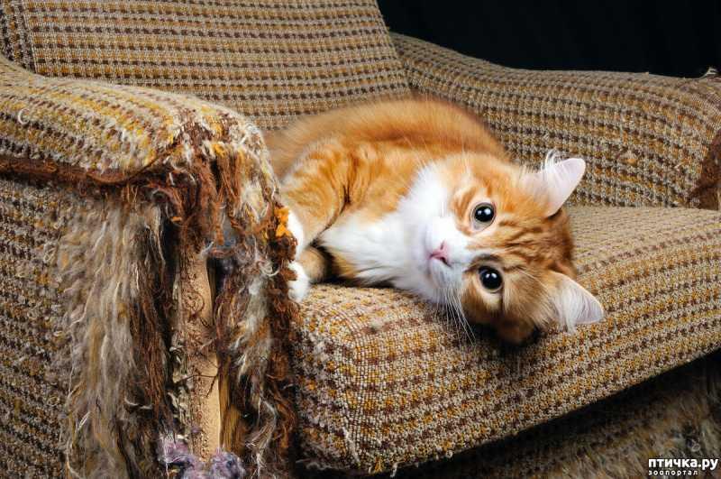 Коты-плохиши или почему питомец хулиганит?