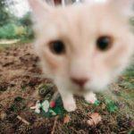 Бывают ли кошки неловкими? У меня бывают 😹