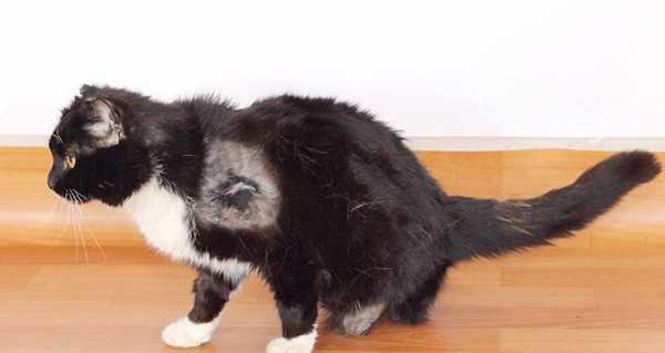 Кот получил удар током в 380 вольт! От такого не выживают, но он смог....