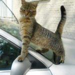 Смешные коты, которые поднимают настроение #150