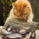 Смешные коты, которые поднимают настроение #153