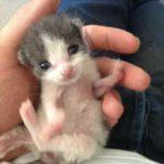 «Я никогда не хотел заводить домашнее животное, но я благодарен судьбе, что нашел его» - слова мужчины, который спас кошку
