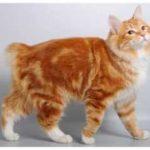 Самые популярные русские породы кошек в мире: ТОП-6