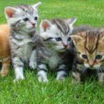 Почему приют может не дать Вам котика?