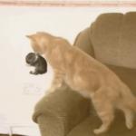 Мама-кошка нашла на диване странный пушистый комок - она не сразу поняла, что это, но решила его усыновить