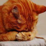 Как опделить погоду с помощью кошки? Приметы и научные обоснования