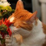 От каких домашних растений лучше избавиться, если живешь с котом?