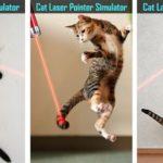 Лазерная указка для кошек: польза и вред для питомца