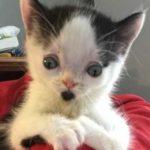 Никто не хотел брать из приюта котенка с необычной внешностью, но случилось чудо и он обрел дом, хозяйку и друга