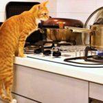 Кот без умолку орал на кухне, хозяин не выдержал, пришел туда, собираясь поддать коту мокрой тряпкой - хорошо, что пришел