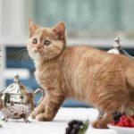 Как отучить кошку лазить по столам?