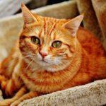 """""""Не троньте котиков"""" ошеломляющий мини-сериал, отражающий печальную реальность"""