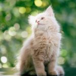 Мой кот - гений маскировки: 5 забавны фотодоказательств