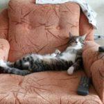 Смешные коты, которые поднимают настроение #170