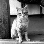 Только благодаря ему и пережили войну - как рыжий кот Васька спас от голода трех женщин в блокадом Ленинграде