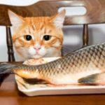 Кот проворовался и стащил рыбку у соседки, но потом искупил свою вину и принес ей на крыльцо маленький «подарок»