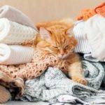 Привычки, за которые могут осудить окружающие, но кошки - никогда