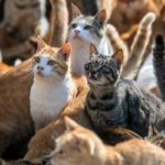 Этот необитаемый остров населен исключительно кошками - как же так получилось и откуда они там взялись