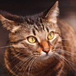 Наш кот убежал во время переезда - ещё одно приключение Ёса