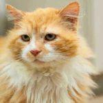 Хозяева решили избавиться от кота и отдали его другим людям, но он все равно вернулся, пройдя длинный путь. Чем все закончилось?