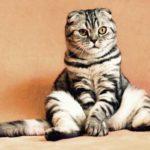 Правда ли, что кошки, которые не выходят несчастны?